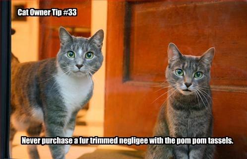 advice Cats - 8350424832