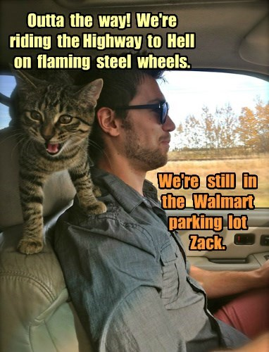 Cats car ride Walmart - 8350471168