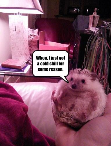 Cats hedgehog SOON - 8350567168