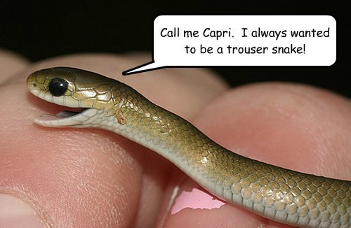 Call me Capri. I always wanted to be a trouser snake!