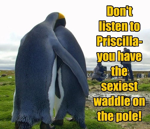 beauty north pole waddle penguin - 8350746880