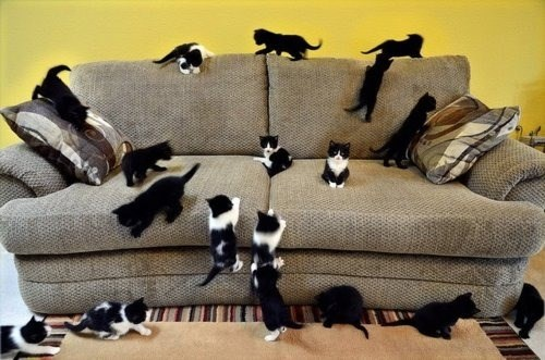 couch kitten cute Caturday Cats - 8350864384