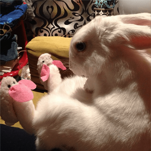 poorly dressed,cute,meta,rabbit,bunny,bunny slippers