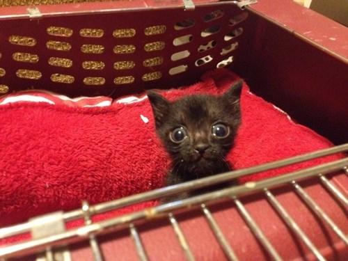 Cats cute kitten - 8350995968