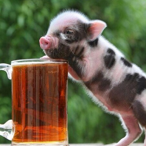 beer cute funny pig tiny - 8351001088
