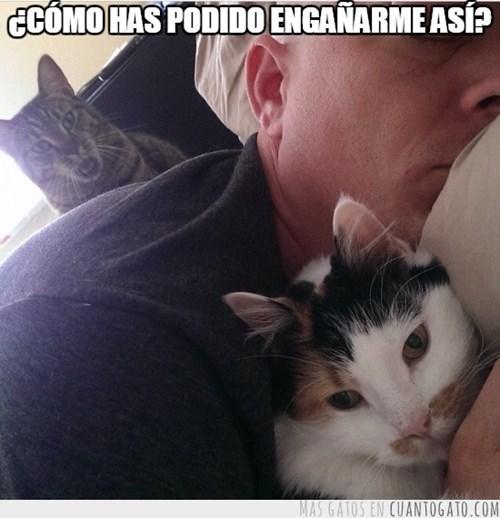 Memes animales gatos bromas - 8351032832