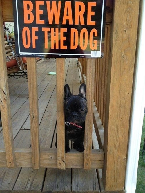 dogs beware of dog puppy cute - 8351092480