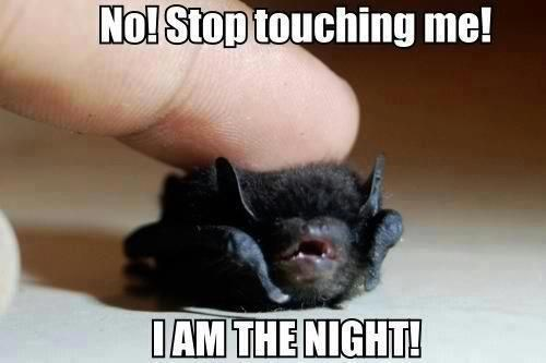 batman,squee,bat