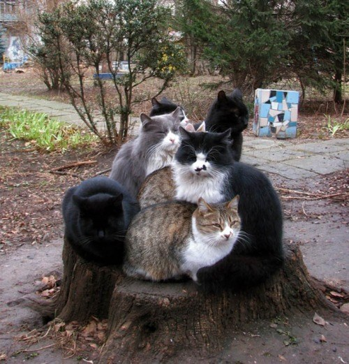 Game of Thrones tree Cats - 8351144192
