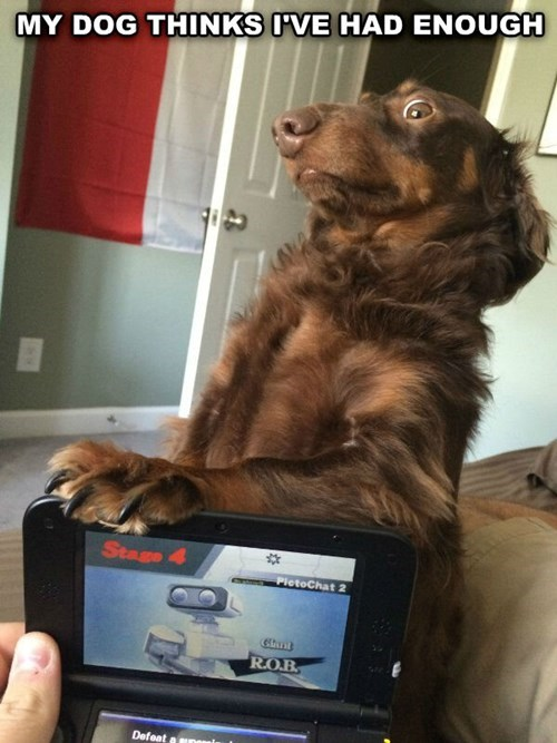 dogs,dachshund,video games,enough