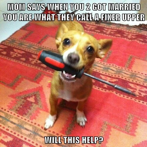 animals screwdriver dogs help there I fixed it - 8351608832