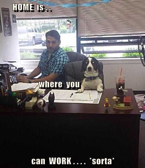 animals - 8351738112