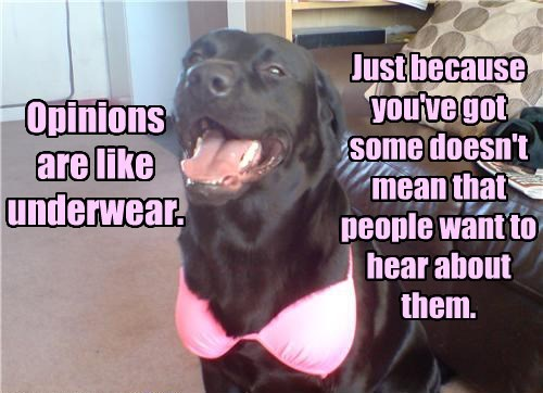 bra,dogs,opinion,underwear