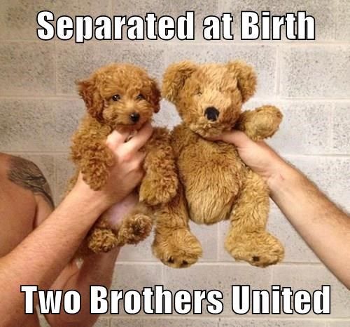 animals dogs birth separated caption - 8352918272