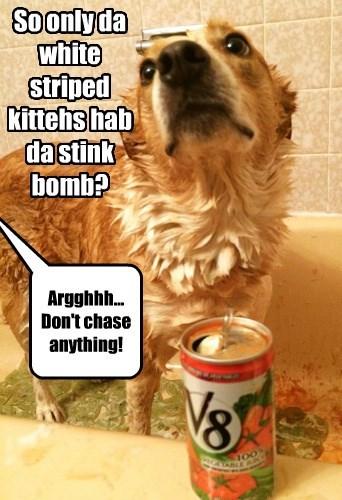 dogs lesson tomato juice skunk - 8352976640