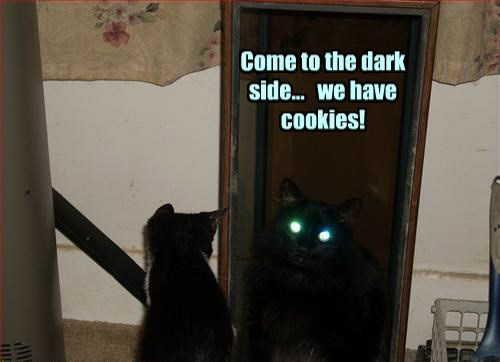 basement cat Cats cookies black cat