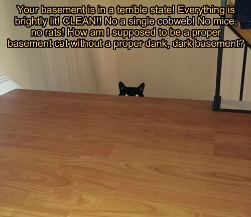 basement cat,basement,Cats,black cat