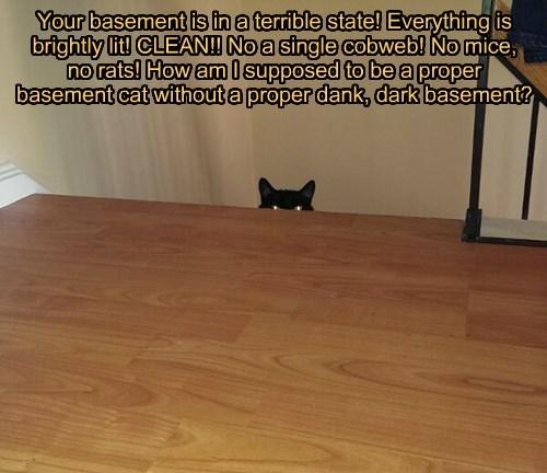 basement cat basement Cats black cat - 8353048576