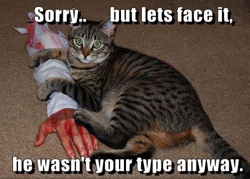 animals boyfriend attack Cats - 8353443840