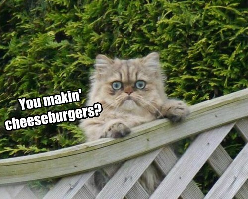 cheezburger,grill,noms,Cats