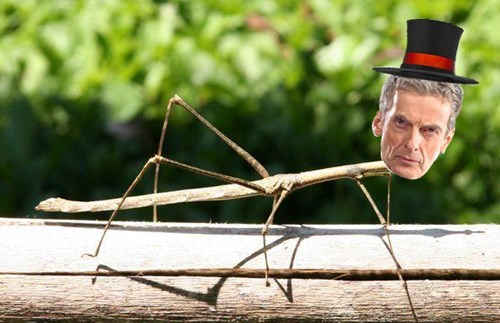 stick bug 12th Doctor - 8354063360