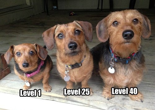 dogs,video games,level up