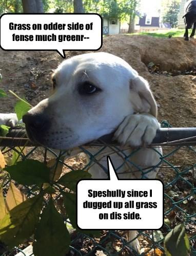 dogs labrador pessimistic grass - 8354741248