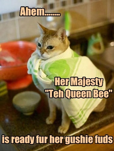queen,royalty,food,noms,Cats
