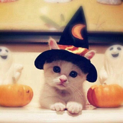 halloween,kitten,cute,Cats