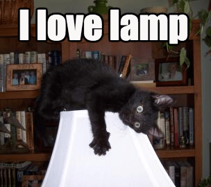 Cats black cat lamp i love you obsessed - 8354958080