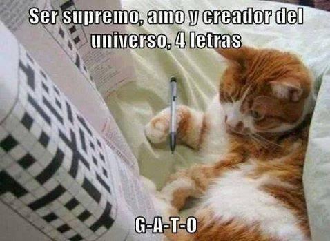 gatos bromas Memes animales - 8355087872