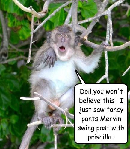 drama monkey gossip - 8355088128