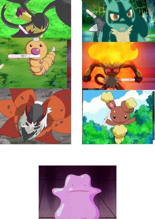 breeding ditto Pokémon pregnancy announcement - 8355143680