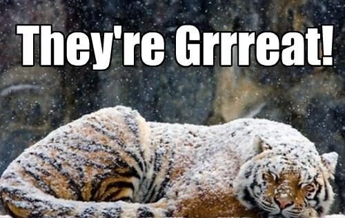 breakfast tiger Cats sleeping - 8355153152