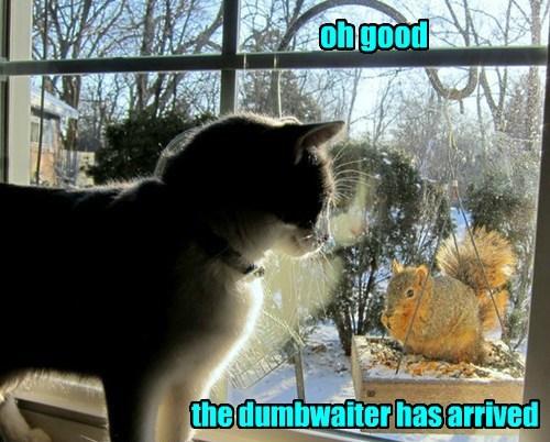 squirrel service noms Cats - 8355220224