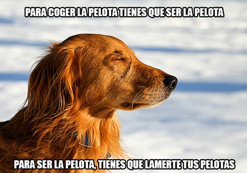 bromas perros Memes animales - 8355223296