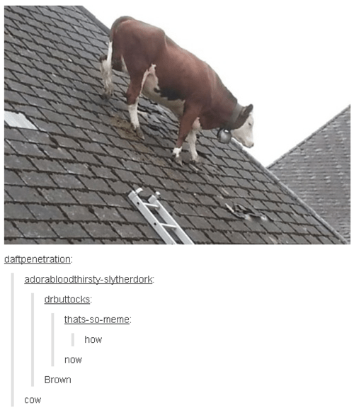 cow,puns,tumblr,failbook,g rated