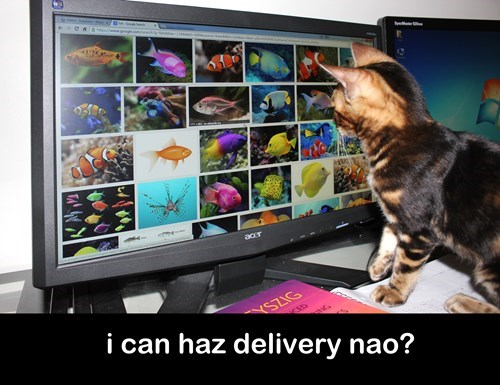 noms fish Cats delivery - 8355546880