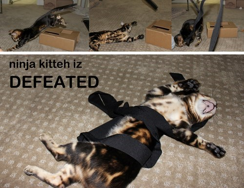 ninja defeat cats are weird Cats - 8355548928