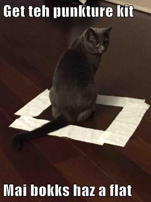 animals boxes if i fits i sits Cats - 8355686912