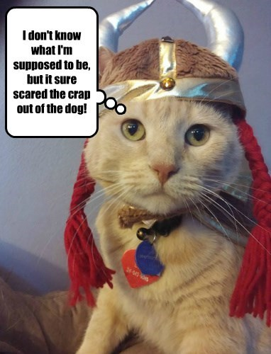 costume halloween viking Cats - 8355791616