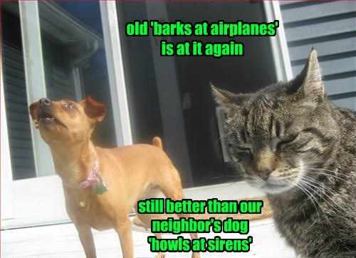dogs annoying bark Cats - 8356026368