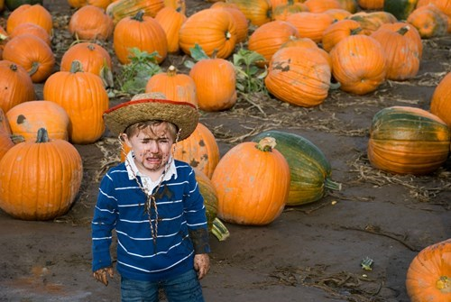 kids pumpkin patch pumpkins parenting - 8356079104
