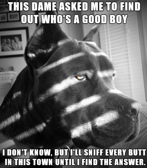 dogs detective good boy black and white
