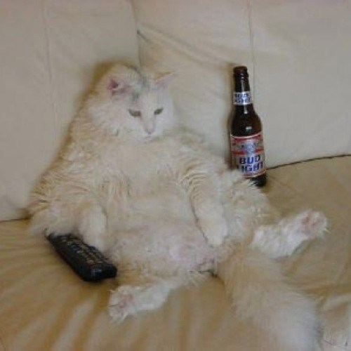 beer,couch,Cats,funny