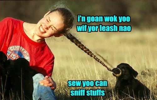 dogs labrador walk ponytail puppy - 8356150528