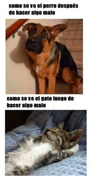 Memes animales gatos perros bromas - 8356183808