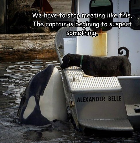 dogs,orca,secret,whale,love