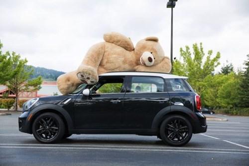 huge teddy bear toys - 8356269312