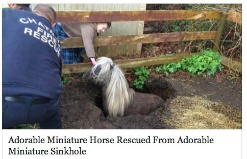 headline cute horse